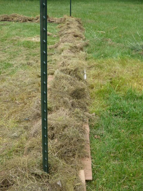 Cardboard and grass clippings to battle the weeds.
