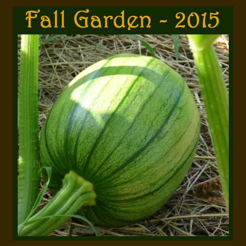Fall Garden 2015 - DaytoDayAdventures.com