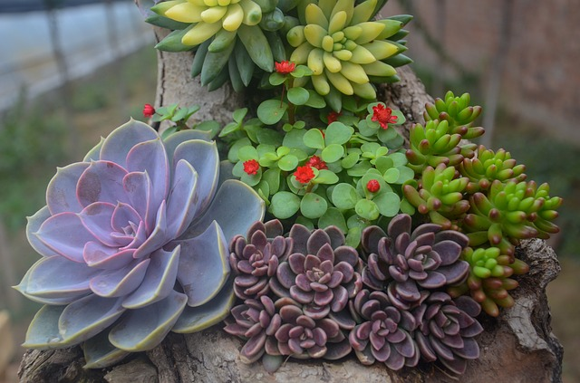 Growing Hens and Chicks - DaytoDayAdventures.com