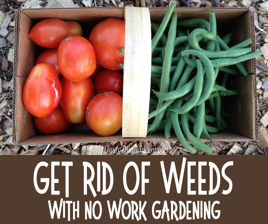 Gardening without work How to get rid of weeds Day to Day
