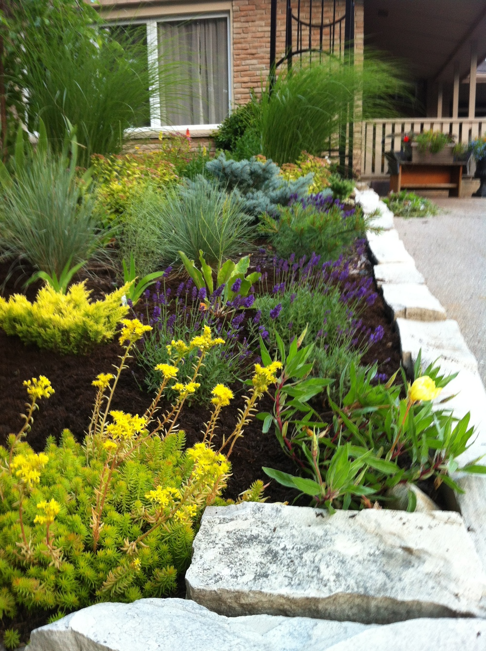 Growing on a dry sunny site with sandy/rocky soil can be a challenge, but there are some secrets for success that will result in a beautiful garden like this.