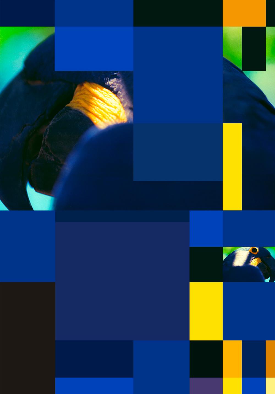 Columbia university paris sergio vega 53 blue parrot color chart webg nvjuhfo Image collections