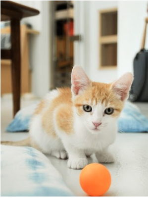 Princeton ~Baby / Male