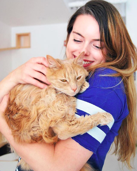 Image of a person holiding our fluffy beige cat, Dolly Purton.