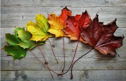 leaves change.JPG