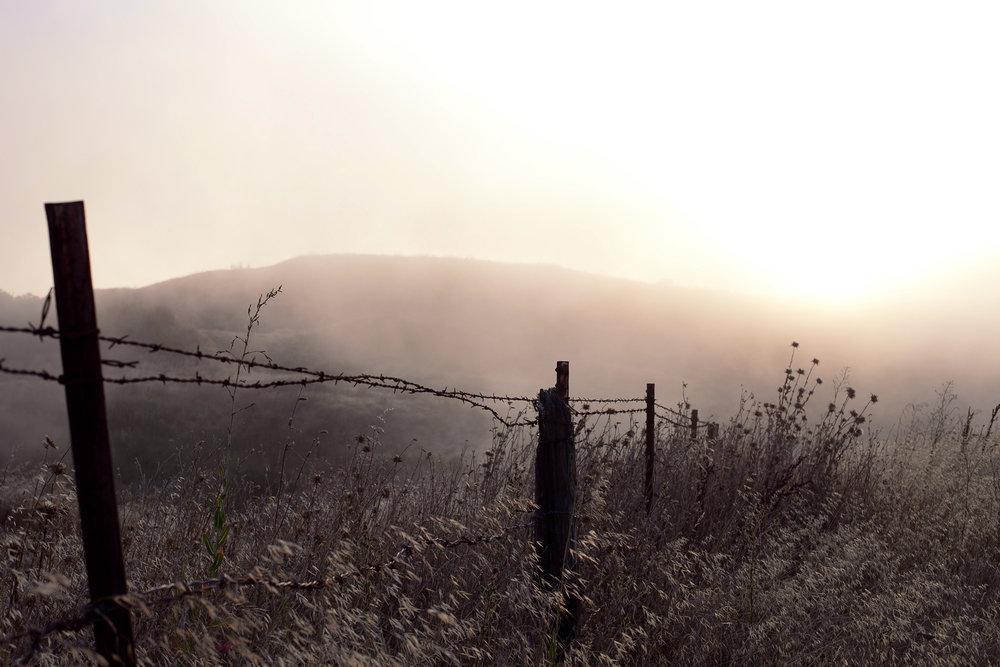 foggy-bay-area-field-wheat-dreary.jpg