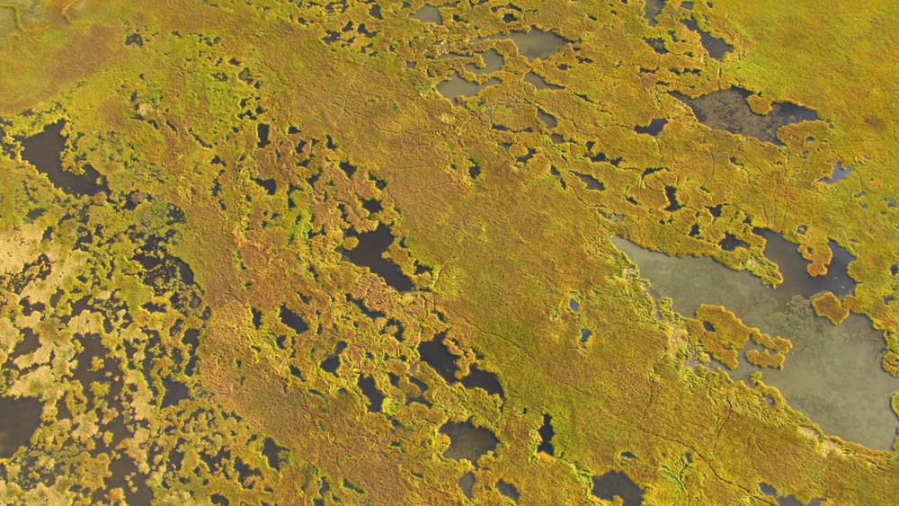 Aerial shot of marshland in Alaska.