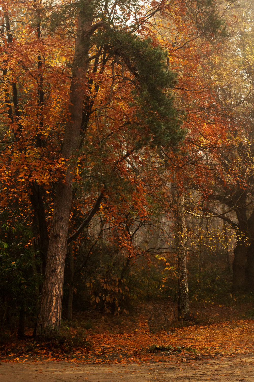 autumn-af.png