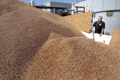 olive pit biomass