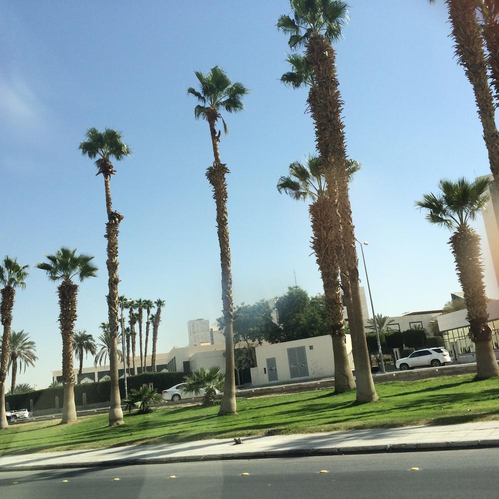 Palmy są różne (jakość zdjęcia trochę kiepska, bo robione z auta)