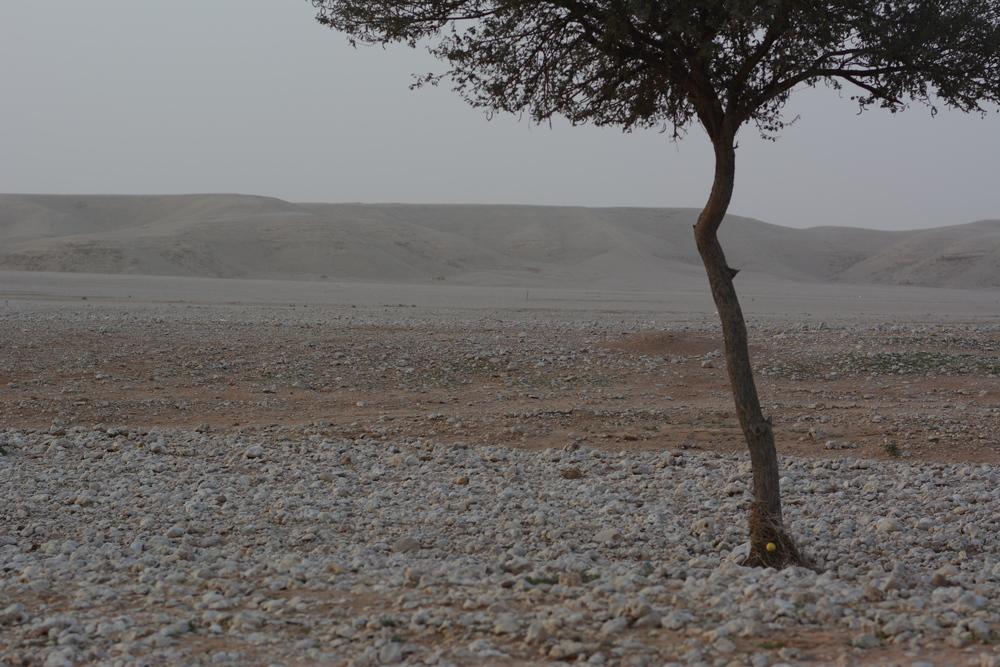 Surowy krajobraz kamienistej pustyni