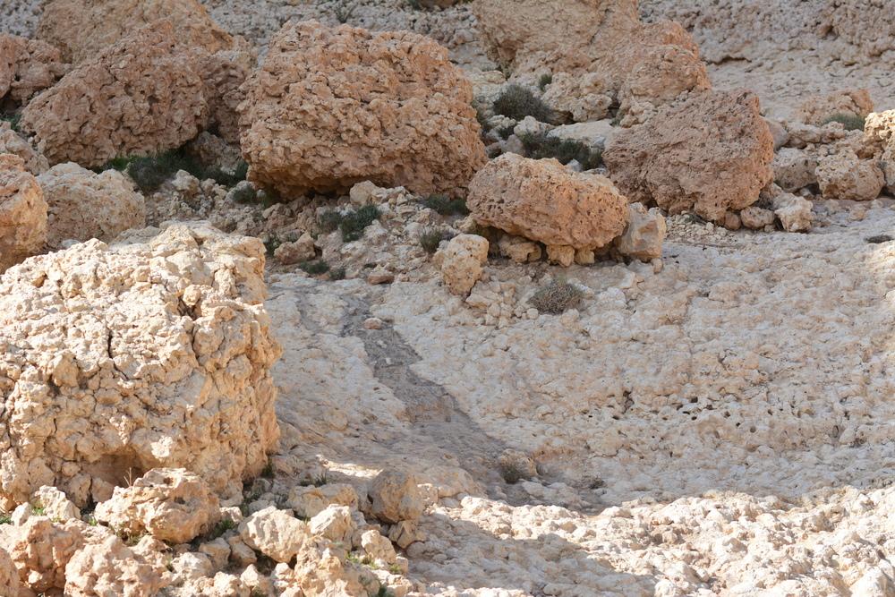 W takich skałach znaleźć można skamieniałości
