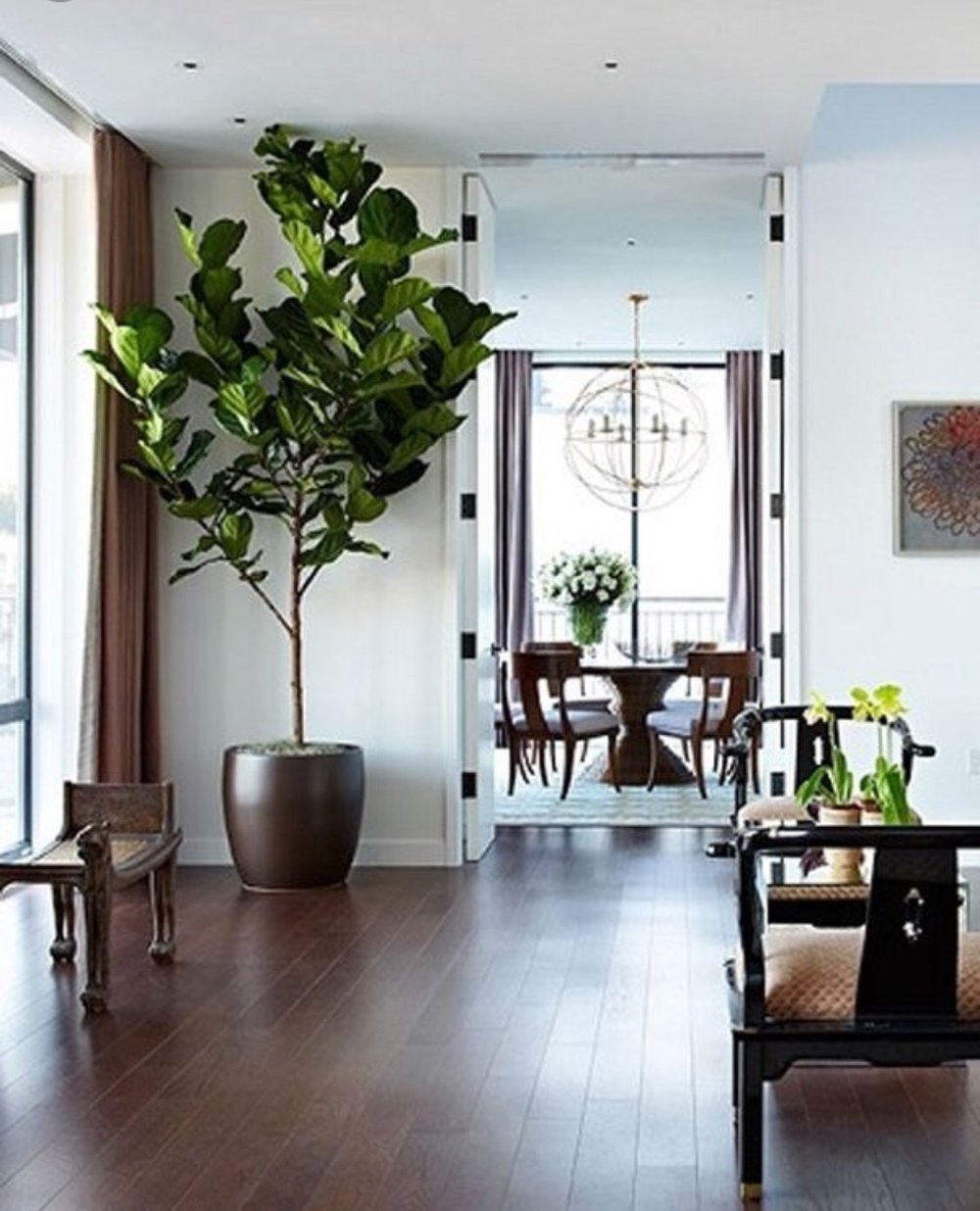 A stunning fiddle ficus makes a real style statement.