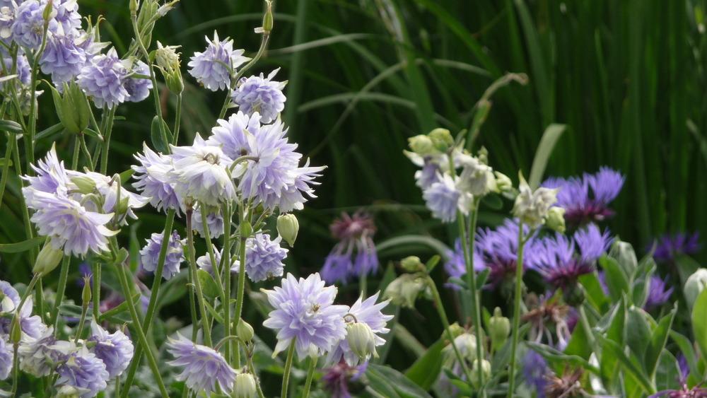 Braunton spring flowers, north devon