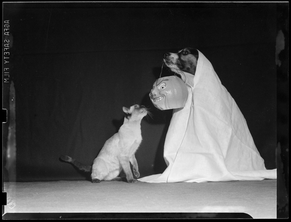 Dog and cat enjoy Halloween, circa 1940.