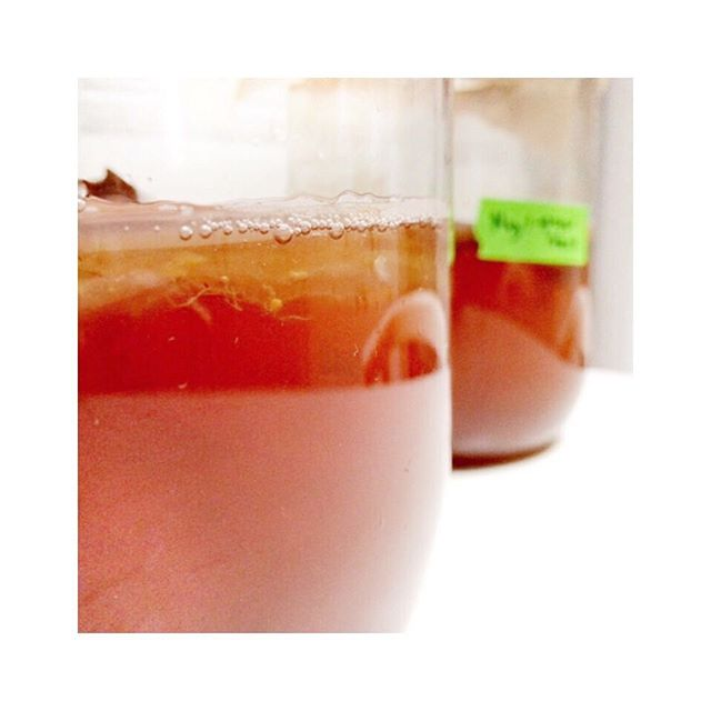 Science and the Hippie Kitchen: how to make delicious homemade kombucha with dragonfruit (or lavender! Or anis. Or whatever you want! Whole Foods isn't the boss of your kombucha flavors anymore!) and how to stay reasonably safe in the process 🤓🌿💥🍹 #homemade #kombucha #scoby #scobylove #fermentation #tea #phstrips #masonjars #homelab #kitchens #foodscience #lavender #dragonfruit #anis #naturalfoods #howto #diy #recipes