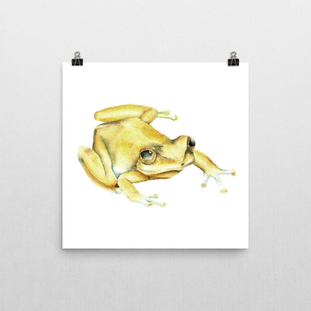 Puerto Rico | Coqui Frog