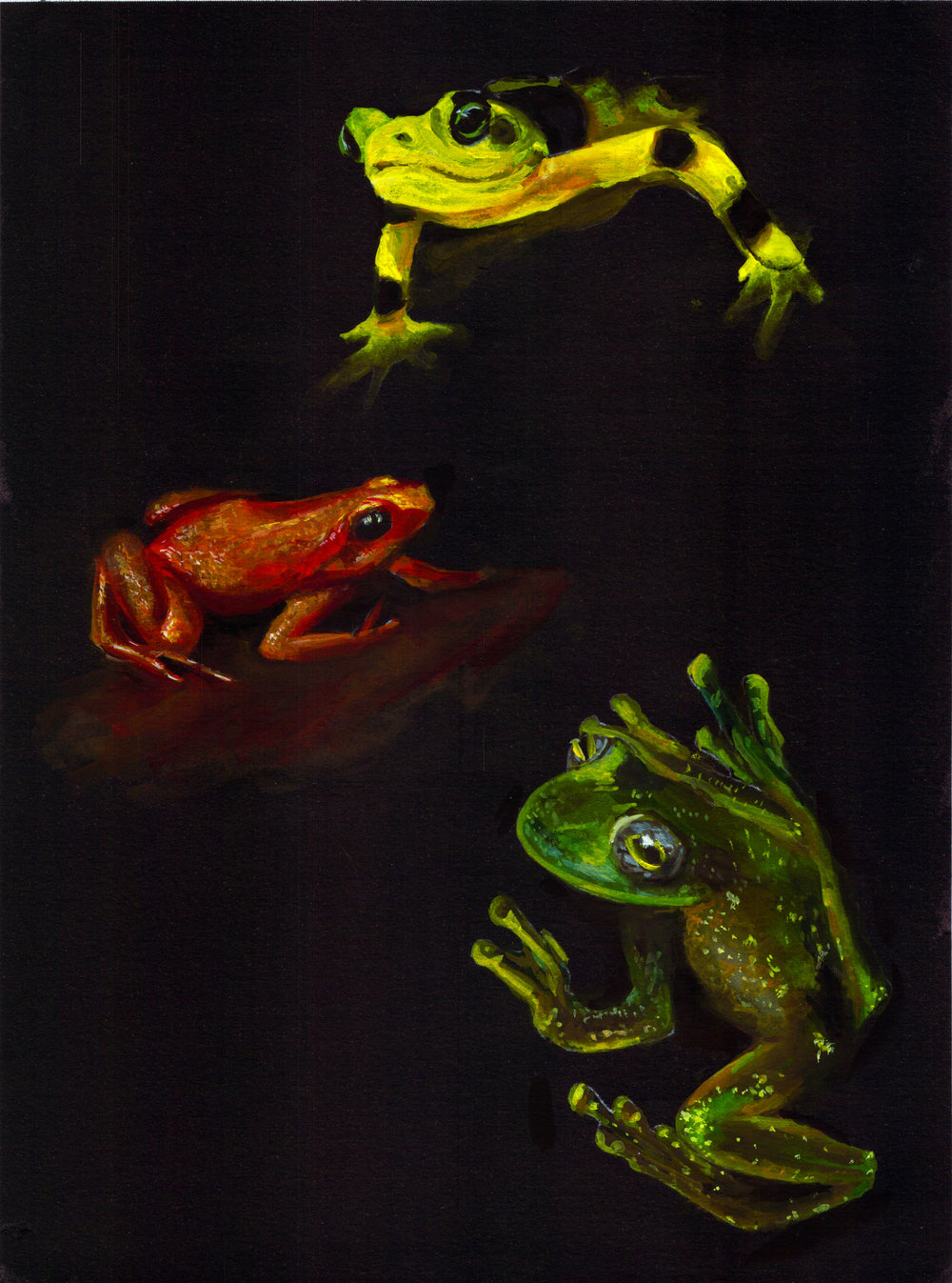Gouache Rainforest Frogs | Animal artist Collective