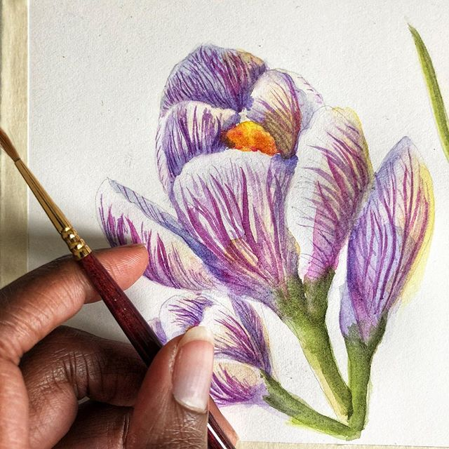 Painted a #crocus for my #qorwatercolors review soon! #watercolor #spring #flower #flowerpainting #botanicalpainting