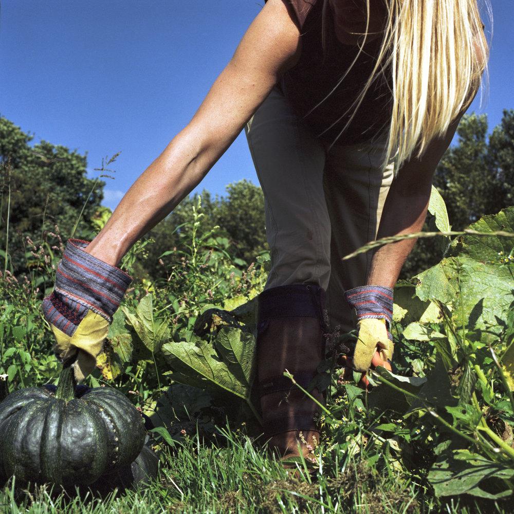 Volkskrantmagazine, beeldreportage over oogst