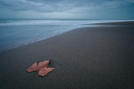 beach leaf