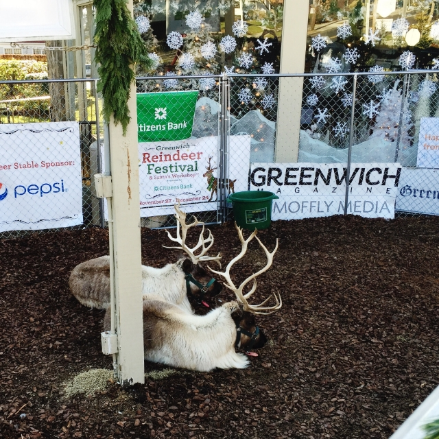 {Visiting the reindeer at McArdle's Florist}