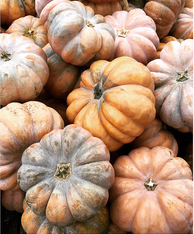 Terrain Pumpkins