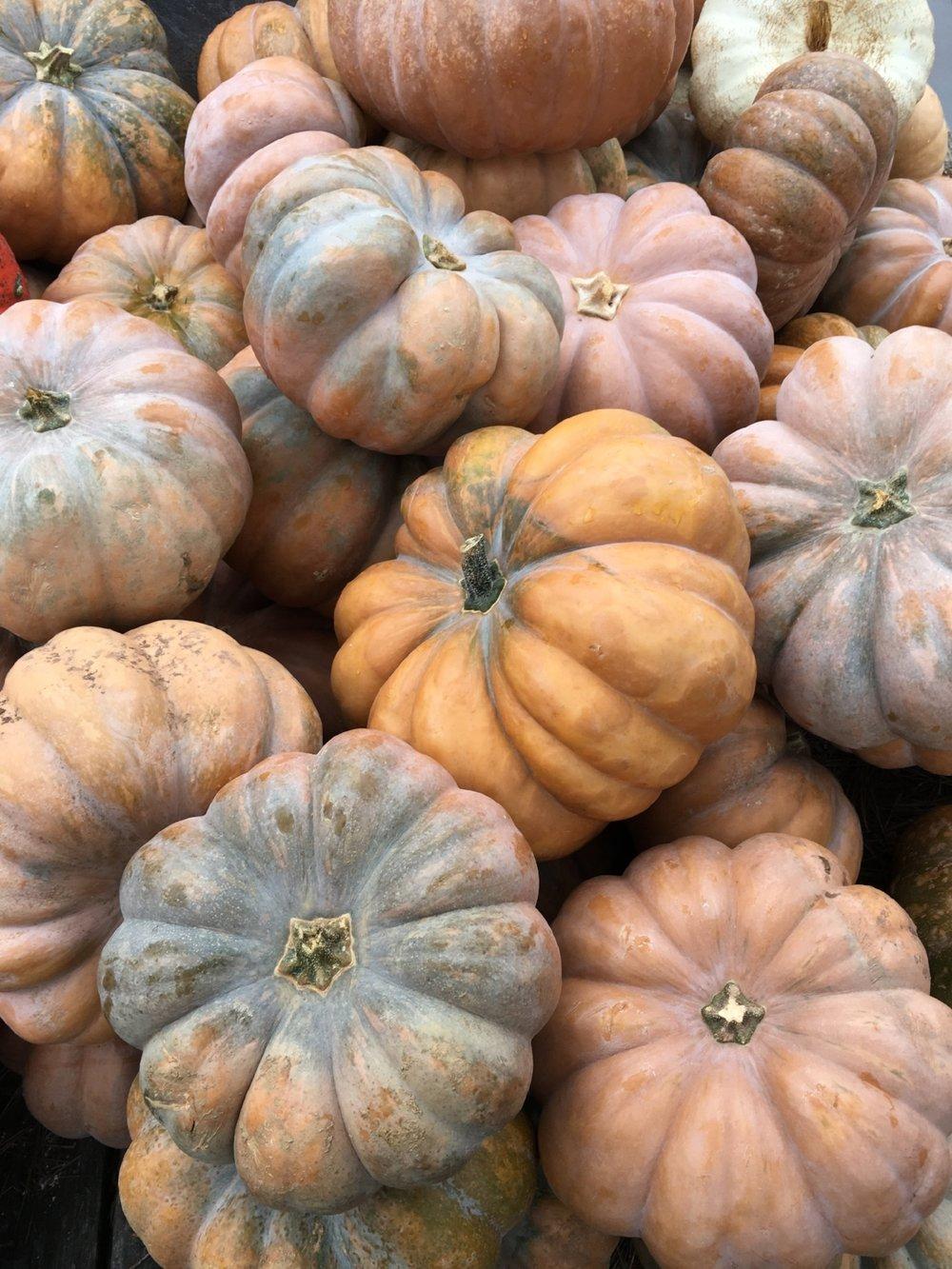 pumpkins terrain