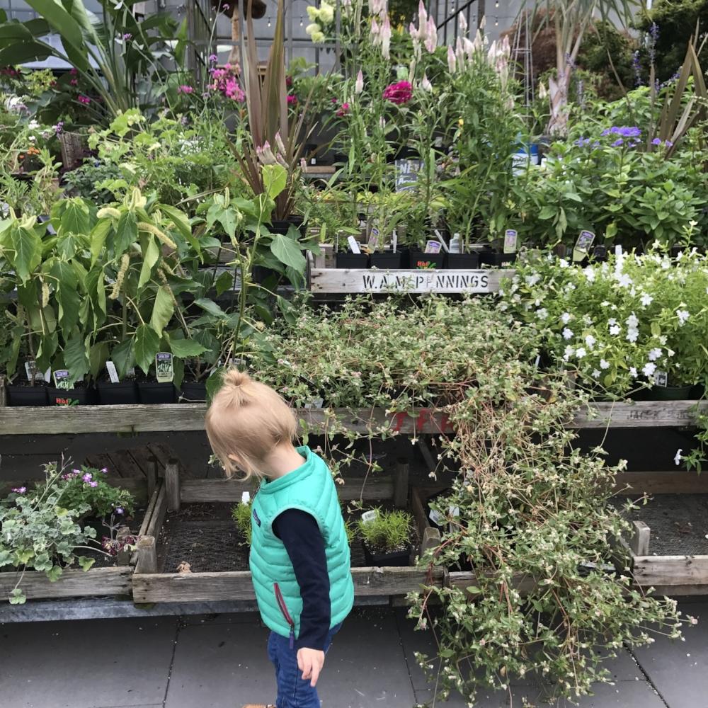 Terrain Westport Lilies and Lambs