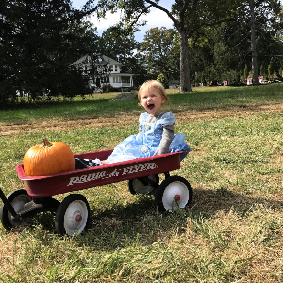 Sam Bridge Pumpkin Patch