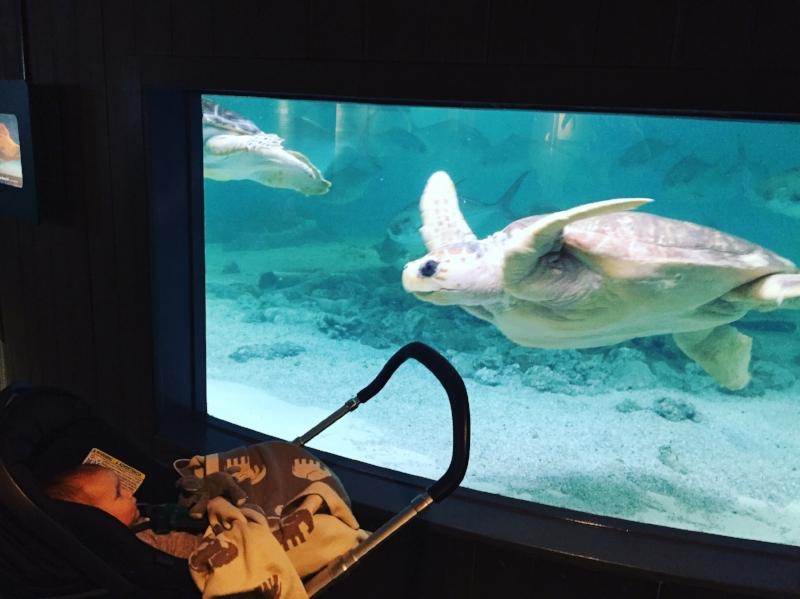 Maritime Aquarium At Norwalk