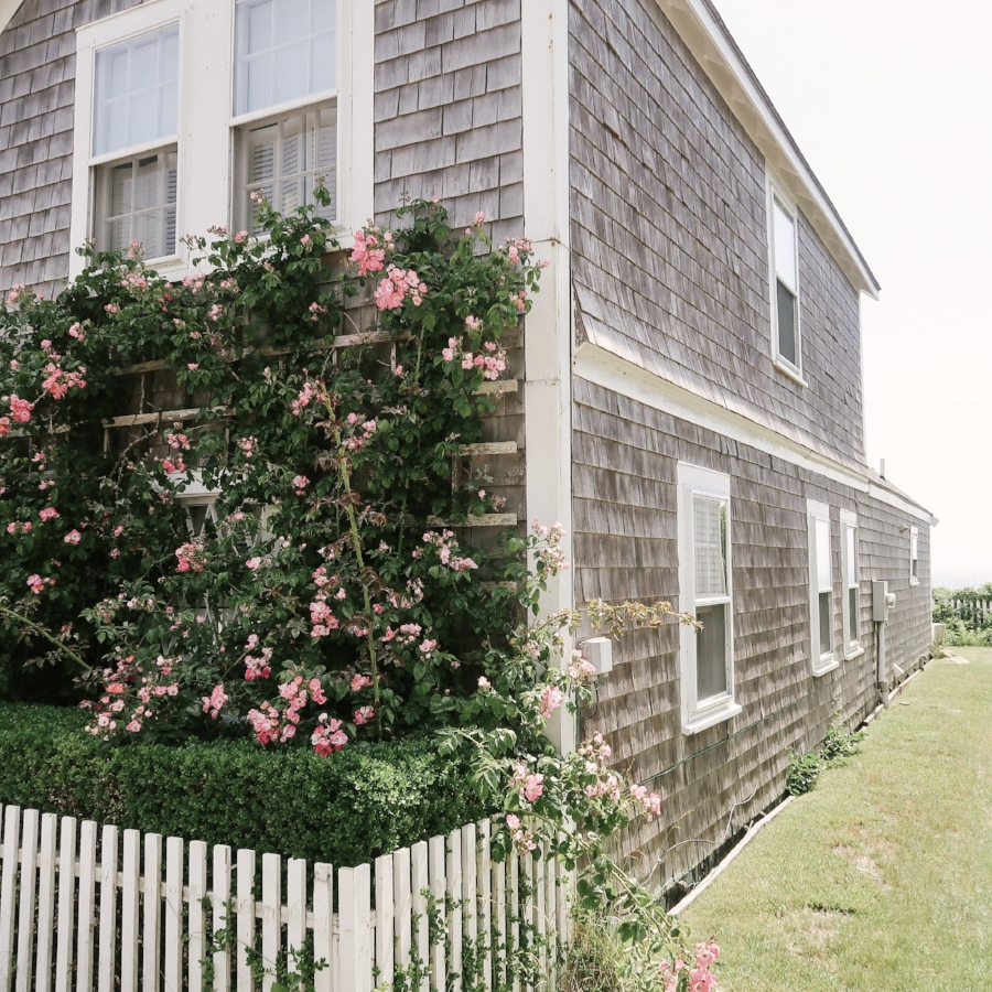 Nantucket+Lilies+and+Lambs.jpeg