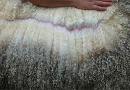 Photo Credit:  G razing Herd Sheep and Wool Company