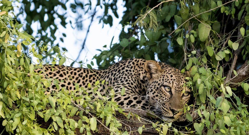 Samburu Mondays.jpg