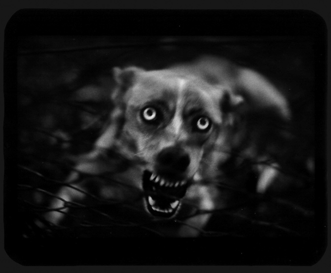 Giacomo Brunelli, The Animals