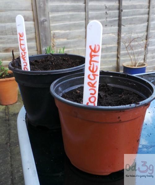 Courgette pots