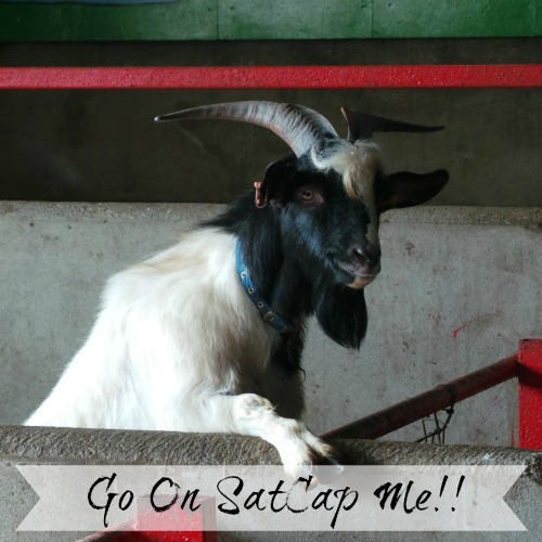 SatCapTrethrone Goat