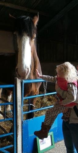 Trethorne Mia Horse