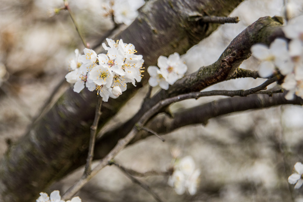 📷 Photo Information Taken :15 Mar 2017, 08:07:31 Camera:NIKON D610 Lens:NIKON Lens Model: 24.0-85.0 mm f/2.8-4. Exposure Time:1/1250 Aperture:f/4 ISO: 800 Focal Length: 66mm