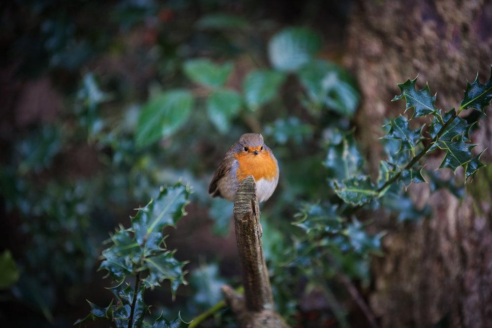 My Friend Robin  | Uckfield, East Sussex