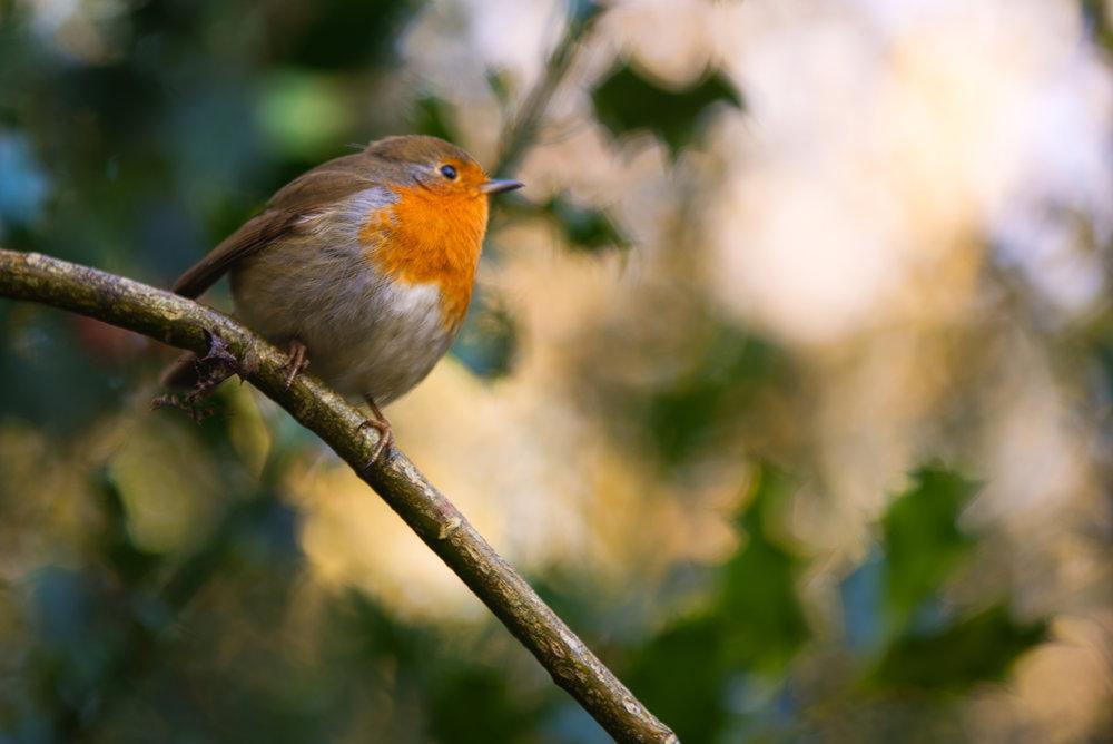 Hello Little Robin | Uckfield, East Sussex