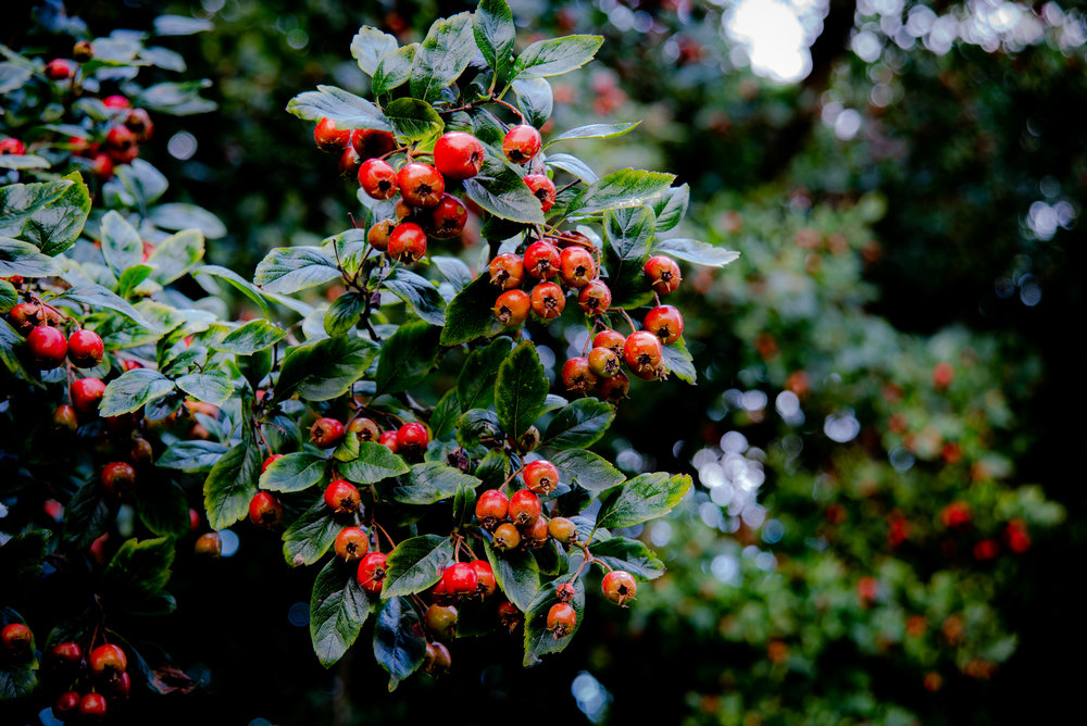 Berry Lovely  | Lewes, East Sussex