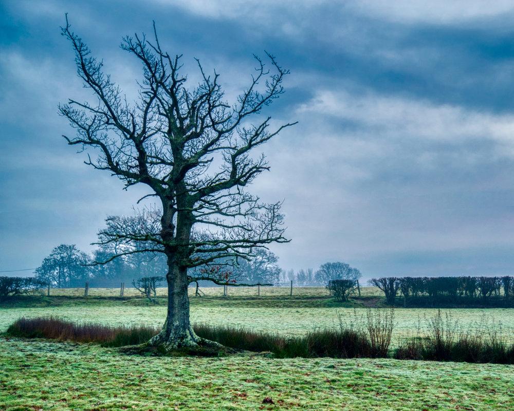 Lonely Misty Tree