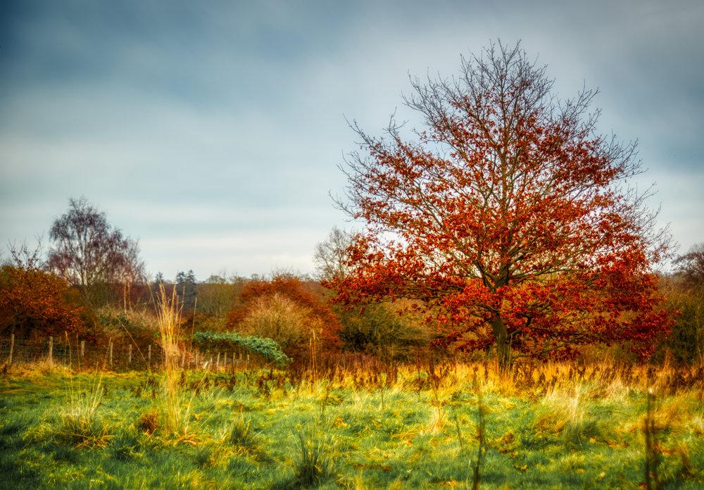 Buxted Park Autumn Colour