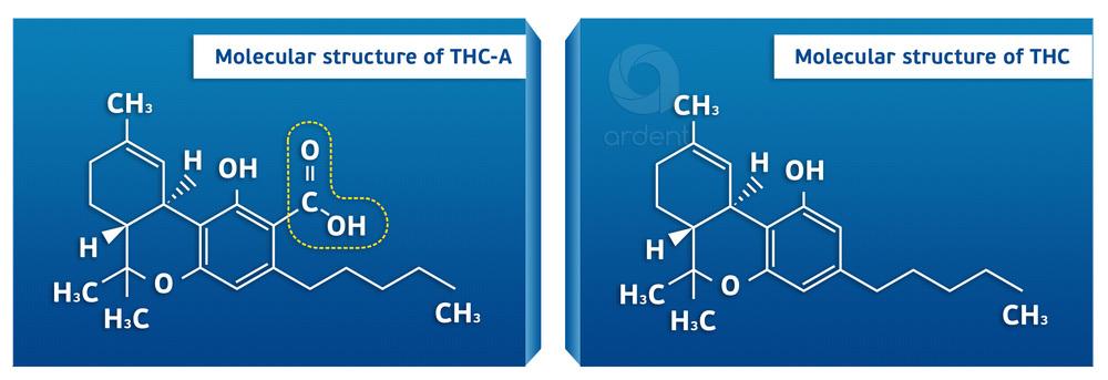THC THCA.jpg