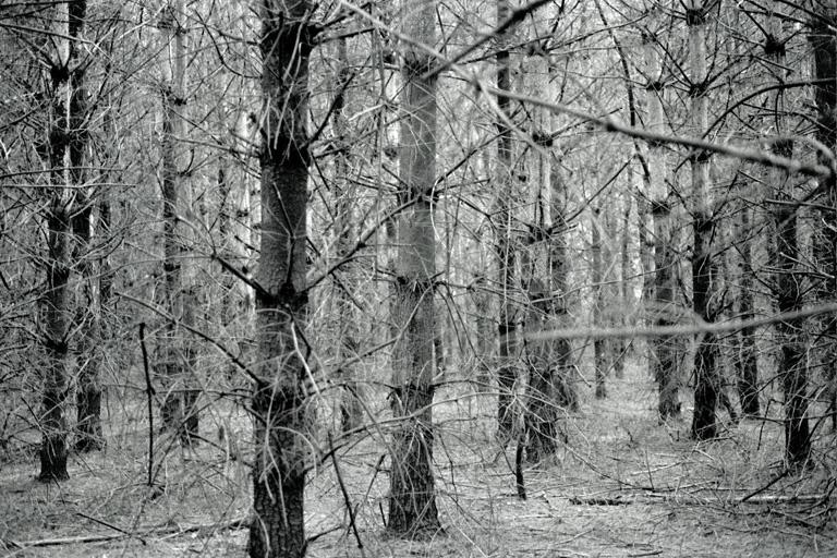pine5 2.jpg