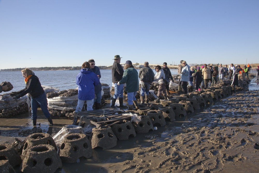 Volunteers work to build oyster reef.