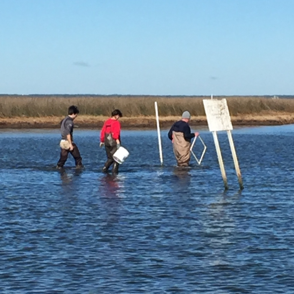 The group moves to another site to assess health of oyster reefs near Coffee Island.