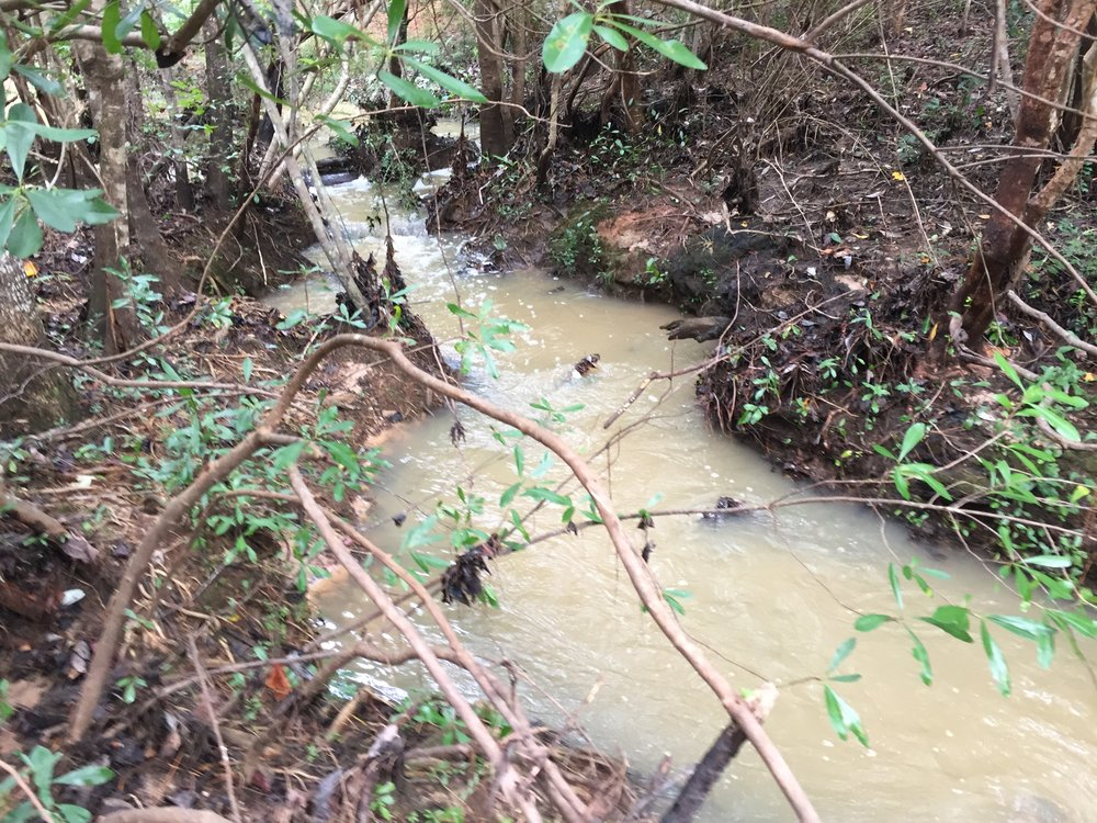 A small headwater reach of D'Olive Creek runs brown with mud.