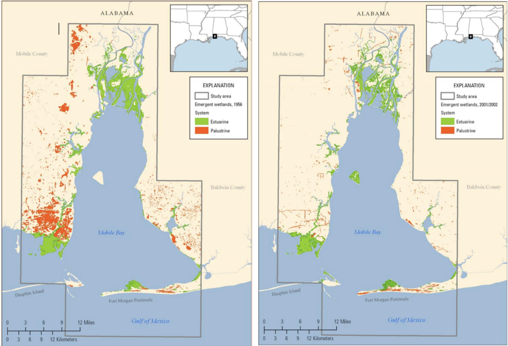 As shown in the images above, from 1956 - 2001 nearly 25,000 acres, more than 50% of all wetlands in the Mobile Bay area were lost. (Photo courtesy of USGS)